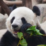 32 Ways for Affiliate Marketers to Recover from Panda